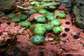 USA_Washington_Seattle_Aquarium_Streichelzoo