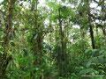 Ecuador_Mindo_Im Regenwald2