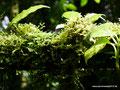 Costa Rica_Santa Elena NP_Nebelwald20