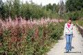 USA_Alaska_Parks Highway_Simone neben Fireweed