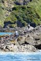 Chile_Insel Chiloé_Pingüinera Punihuil_Humboldt-Pinguine3