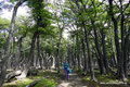 Argentinien_El Chaltén_Durch Südbuchenwald hoch auf den Loma del Pliegue Tumbado5