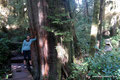 Kanada_British Columbia_Vancouver Island_Pacific Rim NP_Rainforest Loop5