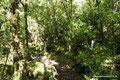 Chile_Cochamó_Valle de Cochamó_Unterwegs im Valdivianischen Regenwald9