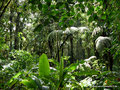 Costa Rica_Santa Elena NP_Nebelwald21