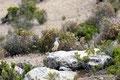 Bolivien_Titicacasee_Isla del Sol - Andenspecht