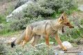 Chile_Yerba Loca Park_Andenfuchs1