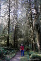USA_Washington_Olympic NP_Regenwald am Hoh River11