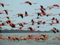 Kolumbien_Boca de Camarones_Im Flamingo Refugium3