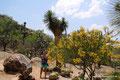 Mexiko_Zentrale Atlantikküste und Puebla_Cadereyta de Montes_Botanischer Garten4