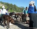 Ecuador_Otavalo_Auf dem Tiermarkt6