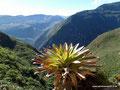 Peru_Lámud_Pueblo de los Muertos7