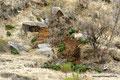 Bolivien_Cordillera de los Frailes_Viele Papageien