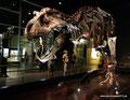 Kanada_Alberta_Drumheller_Royal Tyrrell Museum_T-Rex