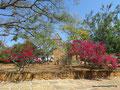 Kolumbien_Barichara_Ein kleiner Park