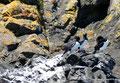 Chile_Insel Chiloé_Pingüinera Punihuil_Kormorane2