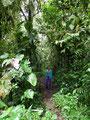 Ecuador_Mindo_Im Regenwald6