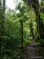Costa Rica_Santa Elena NP_Nebelwald19
