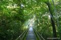 Argentinien_Iguazú NP_Wald