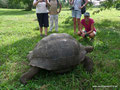Ecuador_Galapagos_Isla Santa Cruz_Galapagos-Schildkröte3