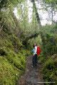 Chile_Carretera Austral_Queulat NP_Im Wald1