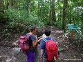 Costa Rica_Monteverde_Curi-Cancha Reserve_Wald4