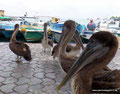 Ecuador_Galapagos_Isla Santa Cruz_Versammlung