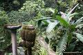 Mexiko_Zentrale Atlantikküste und Puebla_Xilitla_Edward James skurriles Monument im Dschungel5