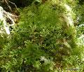 Chile_Cochamó_Valle de Cochamó_Unterwegs im Valdivianischen Regenwald7