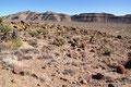 USA_Kalifornien_Mojave National Preserve_Fasskakteen
