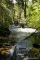 Chile_Cochamó_Valle de Cochamó_Unterwegs im Valdivianischen Regenwald13