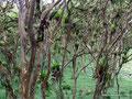 Ecuador_Mindo_Komischer Wald