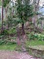 Kolumbien_Ciudad Perdida Trek20