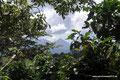El Salvador_Apaneca_Ein Vulkan durch Kaffeepflanzen