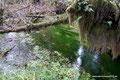 USA_Washington_Olympic NP_Regenwald am Hoh River15