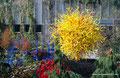 USA_Washington_Seattle_Chihuly Garden and Glass_Garden1