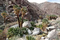 USA_Kalifornien_Anza-Borrego Desert SP_Palm Canyon Trail4