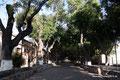 Mexiko_Mexiko-City und Umgebung_Morelia_Alte Allee