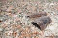 Argentinien_Bosques Petrificados de Jaramillo NP_Versteinerte Bäume9