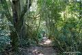 Argentinien_Parque Provincial Salto Encantado_Waldweg
