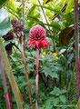 Costa Rica_Paraíso_Botanischer Garten Lankester2