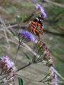 Kolumbien_Tierradentro_Schmetterling1