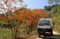 Mexiko_Zentrale Atlantikküste und Puebla_Sierra de Gorda_Pancho mag rot