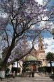 Mexiko_Hochland_Lagos de Moreno_Blaue Blüten vor der Kirche