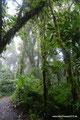 Costa Rica_Santa Elena NP_Nebelwald1