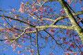 Uruguay_Colonia del Sacramento_Blüten im Herbst
