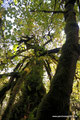 Kanada_British Columbia_Vancouver Island_Little Qualicum Falls PP_Regenwald im Herbstkleid