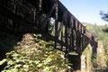 Kanada_British Columbia_Vancouver Island_Goldstream Park_Eisenbahntrasse