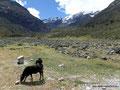 Peru_Cordillera Blanca_Weideland auf 4000 Meter