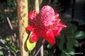 Mexiko_Oaxaca und Chiapas_Riesige Blüte
